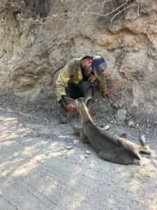 firefighters help dehydrated fawn