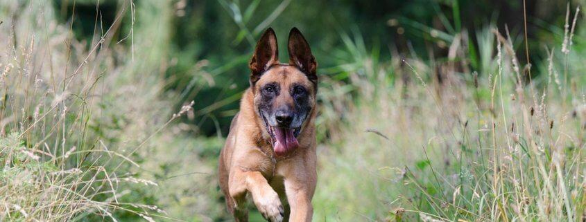 Five dogs will be euthanized
