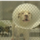 Freezing and injured dog rescued