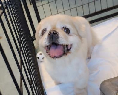 Sweet senior at shelter