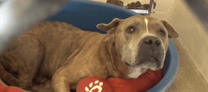 Very good boy waits to be saved