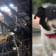 Very good dog's final act to save his family