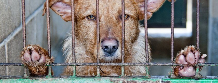 Groomer cruelty charges