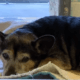 Heartbroken senior dog