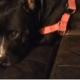 Hero dog killed in house fire