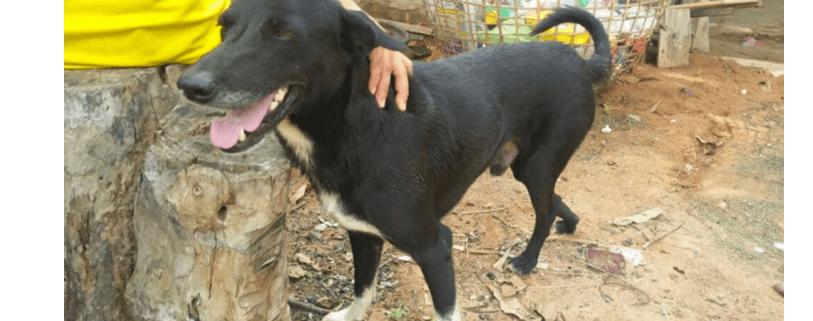 Hero dog saved infant