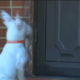 Hero pup booted from apartment complex