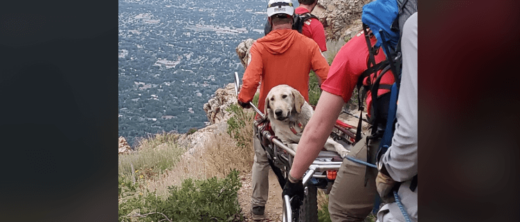Dog nearly died from heatstroke on hike