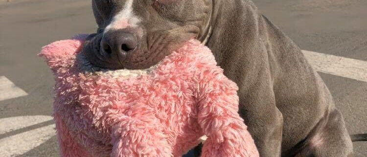 dog and stuffie in need of a loving home