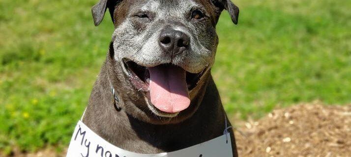 Dog homeless for 1068 days