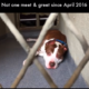 Homeless dog has no meet and greet for years