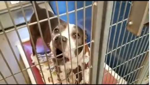 homeless senior dog says hello