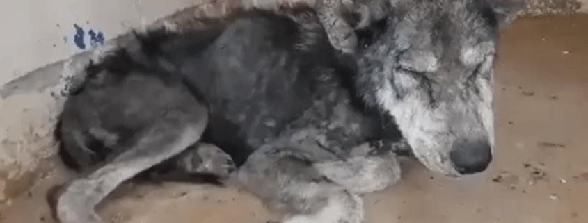 Horribly neglected strays