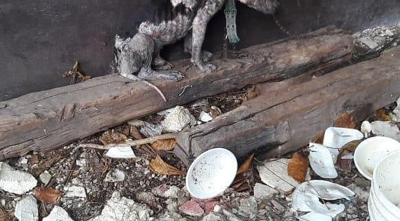 Neglected dog rescued from sad life on a chain