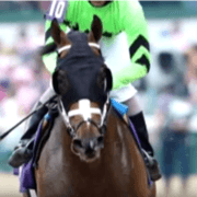 Horse died at end of race on Saturday