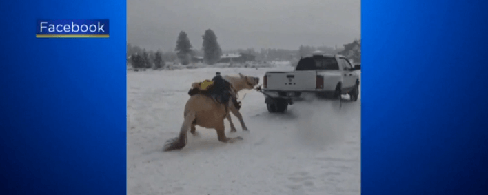 Video of horse being pulled by truck sparks investigation