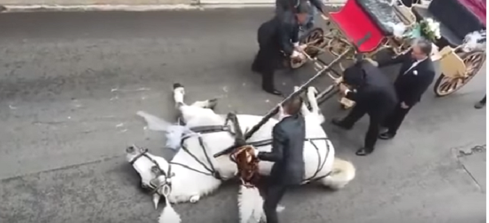 carriage horse collapsed in exhaustion