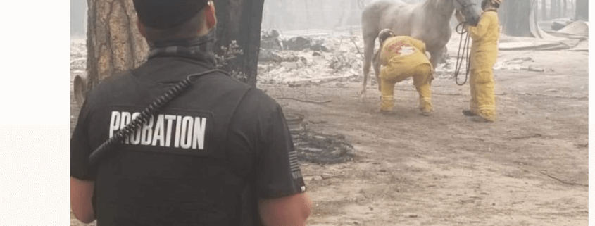 Horse survives wildfire that destroyed family's home