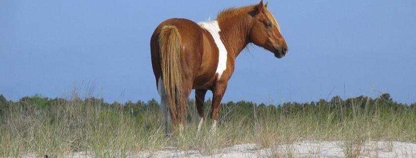 Wild horses killed by hurricane Dorian