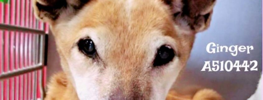hospice needed for elderly dog