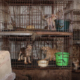 Hundreds of neglected animals rescued