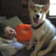 Hunter killed family dog