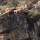 Hunting dogs and deer fall over cliff