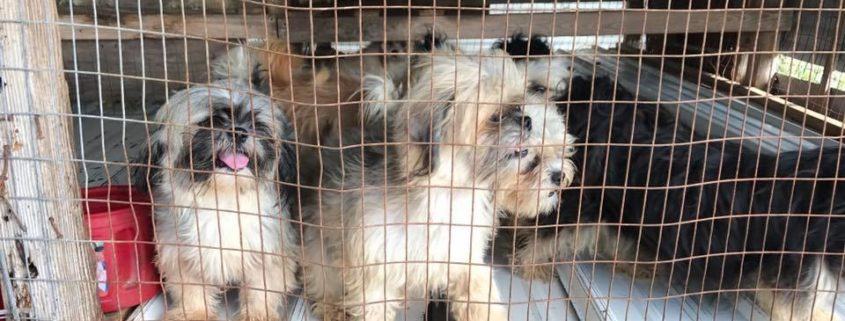 Dogs seized from inhumane puppy mill