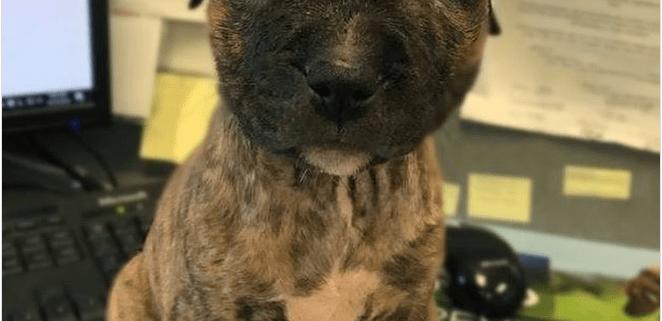 Injured puppy thrown in dumpster