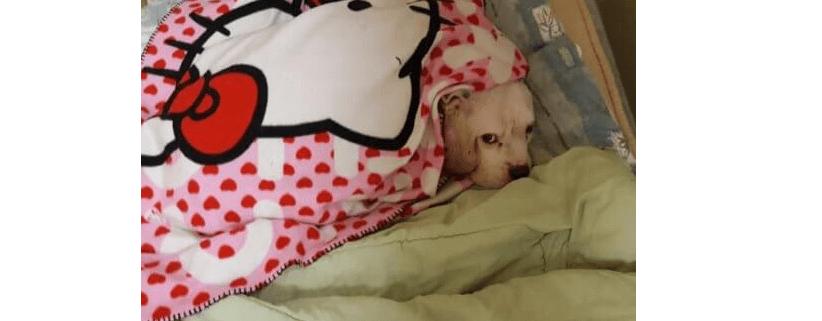 Minimal jail time for couple who abandoned dog