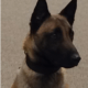 K9 found dead in kennel