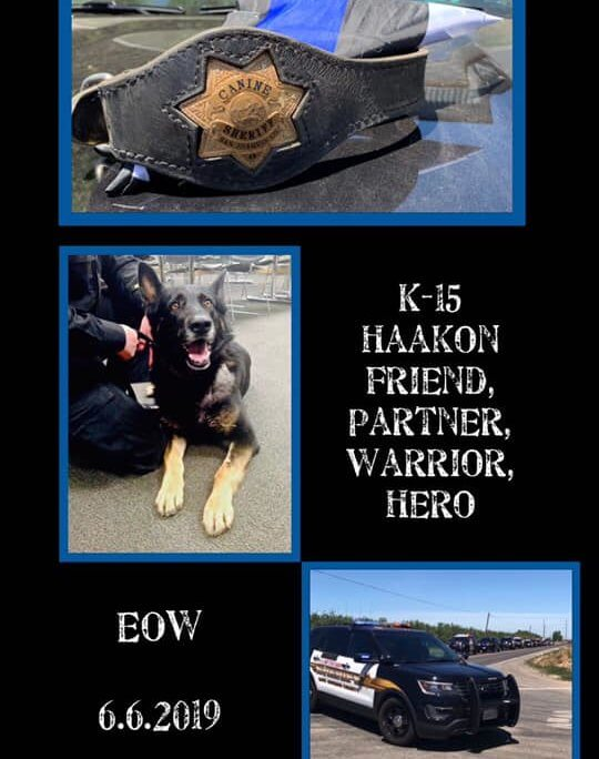 K9 died after collapsing during training