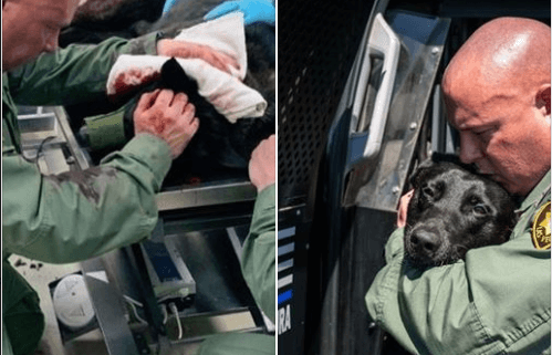 K9 repeatedly stabbed