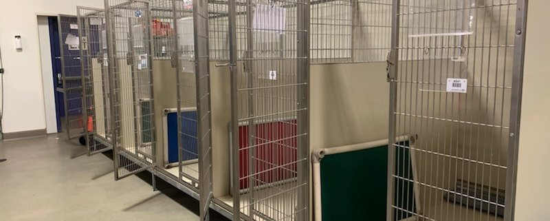 Kennels empty at shelter