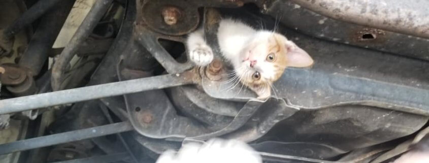 Kitten stuck in car frame for hours
