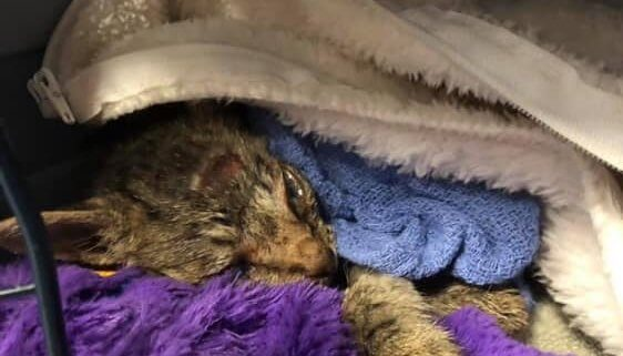 Kitten tragic ending after being abandoned