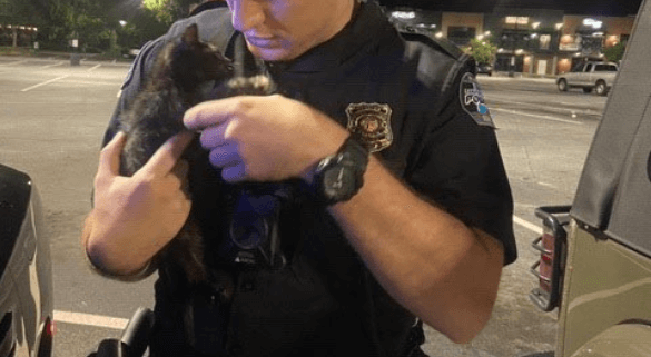 Kittens were thrown from moving car