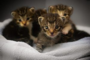 Kittens thrown from car during rush hour