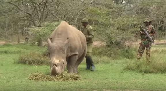 Last male northern white rhino has died