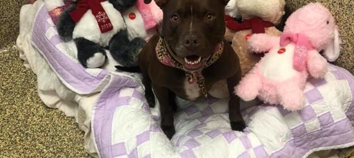 Long time shelter resident finally adopted