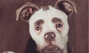 Grumpy face dog