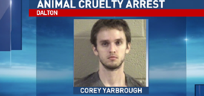 Man accused of hanging dog from fence
