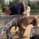 Man allegedly shoved hose down dog's throat