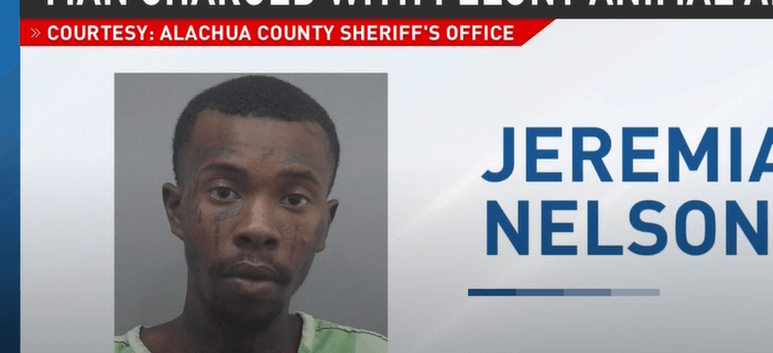 Man accused of abusing puppy