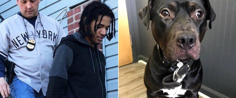 Man facing cruelty charge for throwing dog from car