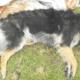 Man beat puppy to death