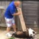 Man caught beating a dog
