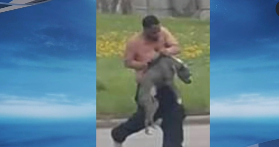 Viral video of dog beating leads to an arrest