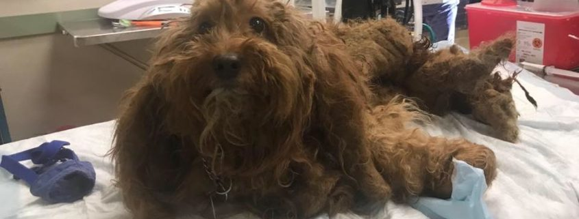 Man charged with cruelty after discovery of matted maggot-infested dog