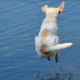 Man drowned trying to rescue dog who jumped into lake